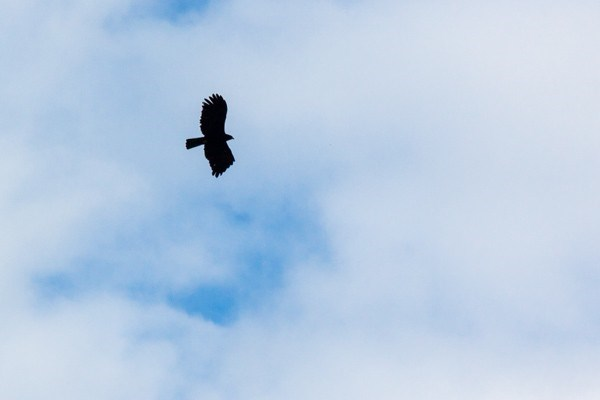 Cánh chim của núi rừng